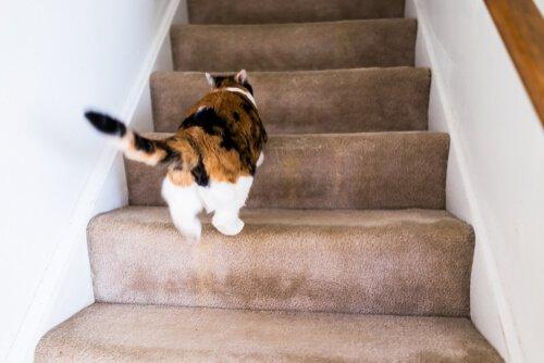 Kedim Niçin Evde Deli Gibi Koşturup Duruyor?