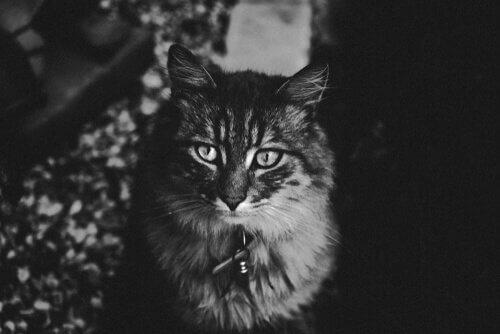 deli gibi koşturup duran kedi