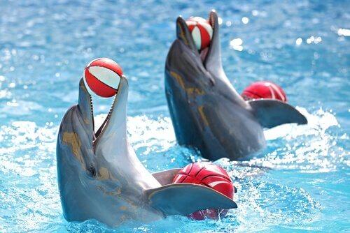 dolphinarium yunus gösterme merkezi