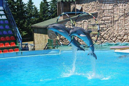 Dolphinarium : Özgür Bir Alan Mı, Hapishane Mi?