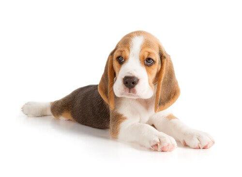 erkek köpekler için sevimli isimler