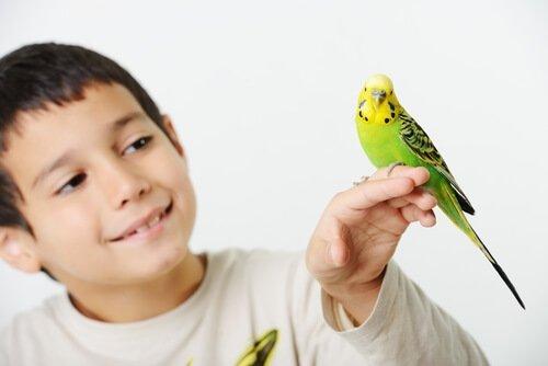 evcil hayvan olarak beslediğiniz kuşlarda parazitler