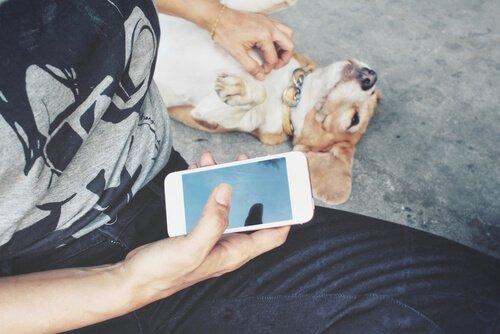 evcil hayvanınız kaybolursa sosyal medyayı kullanın
