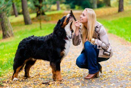 parkta sahibiyle oynayan köpek