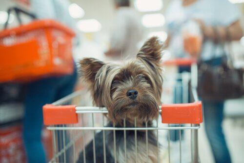 Evcil Hayvanlarla Alışveriş Yapabilir Misiniz?