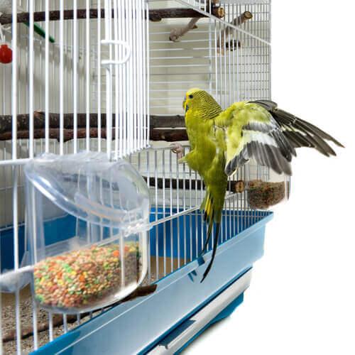 evcil kuşları parazitlerden arındırmak