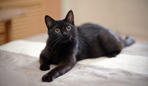bir kedi evde ne kadar yalnız kalabilir?