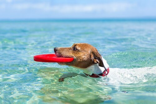 Köpeğinizle Birlikte Sıcak Havaların Tadını Çıkarmak