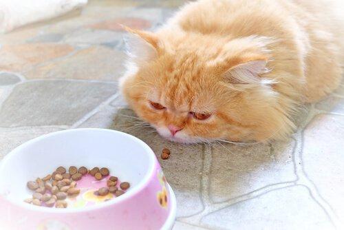 hasta kedi ve iştahsızlık