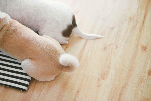 Köpeklerin Kuyruk Hareketleri