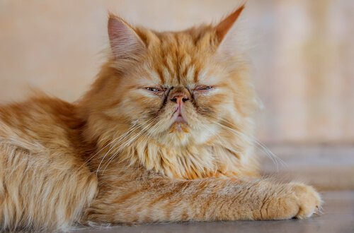 Uzun Tüylü Kediler İçin 12 İsim