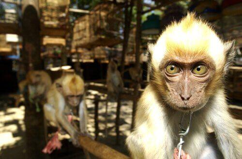 İspanya: Avrupa'ya Yasa Dışı Hayvan Kaçakçılığının Geçiş Ülkesi
