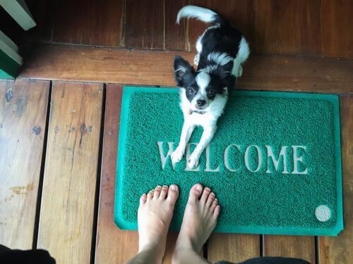 Köpeğinizin İnsanların Üzerine Atlama Alışkanlığına Bugün Son Verin!