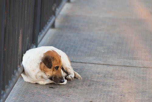 Evcil Hayvanınız Kaybolursa Ne Yapmalısınız?