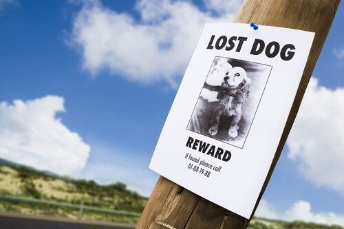 kayıp köpek ilanı