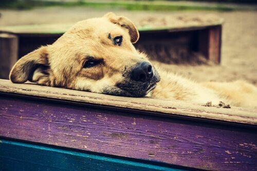 kayıp köpek