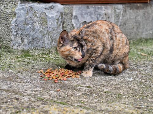 kedi kolonileri beslenmesi