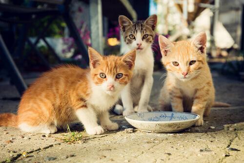 Kedi Kolonileriyle İlgilenmek