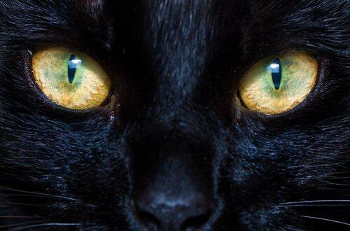 Kedi ve Köpek Göz Bebekleri: Nasıl Çalışırlar?