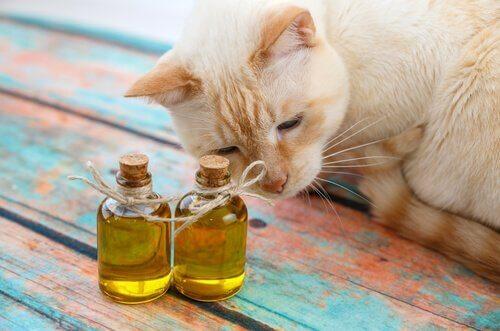 Zeytinyağının Kediler için Faydaları