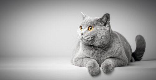 Kedilerin Beden Dili Hakkında İlginç Bilgiler