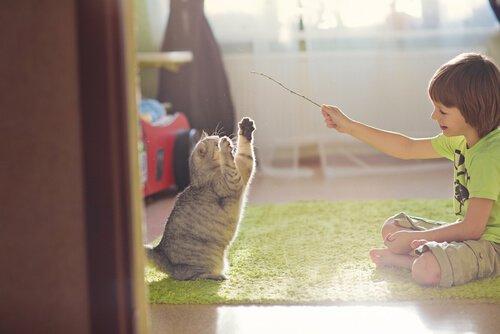 Kedinizle Oyun Oynamak İçin İpuçları