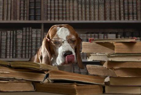 kitap okuyan gözlüklü köpek