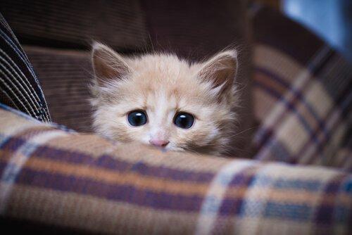 koltukta oturan yavru kedi