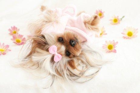 çiçekler ve köpek
