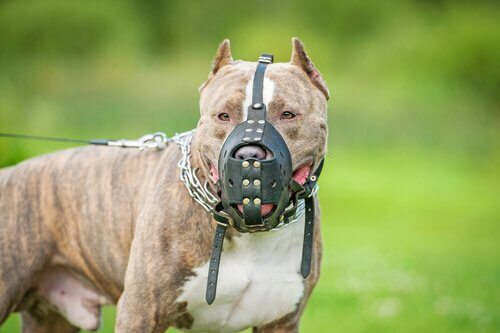 Köpeğiniz İçin Sigorta Yaptırmak Gerekli Mi?