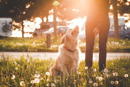 köpeğinizle birlikte parka gitmek
