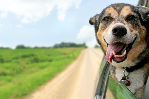 köpeğinizle tatile çıkmak için plan yapmak