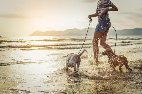 Köpeğinizle Tatile Çıkmak: Yaz Planlarınızı Yapın
