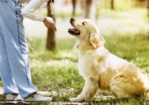 Köpek Eğitirken Yapılan Hatalar