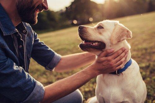 Köpek Etolojisi Nedir?