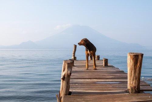 göl kenarında köpek