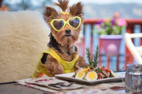 salata yiyen köpek