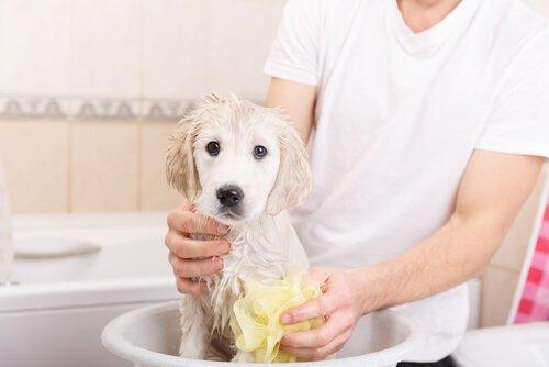 köpeğinizi nasıl yıkayabilirsiniz