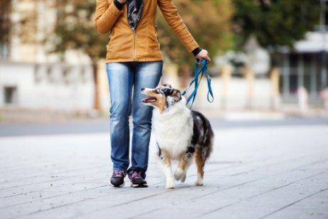 köpek ile yürüyüşe çıkmak