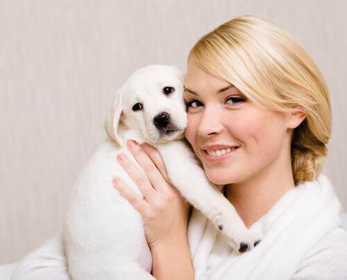 sahibinin kucağında beyaz köpek