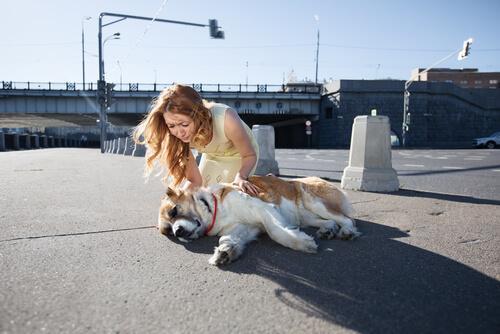 Köpekleri Sahil Kenarına Götürmek Mümkün Mü?