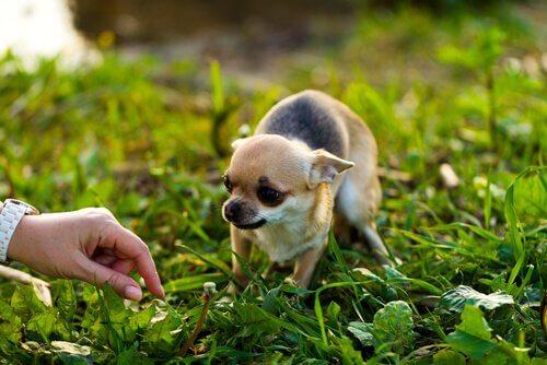 Korkmuş Bir Köpeğe Yaklaşmak İçin İpuçları