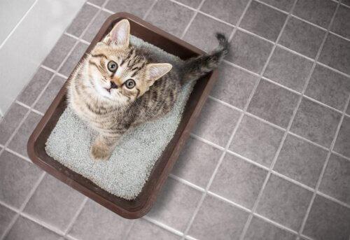 kum kabında oturan kedi