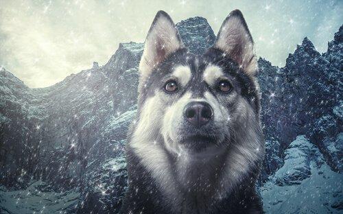 Köpeklerin Sınıflandırılması: Kurtlara Ne Kadar Yakınlar?