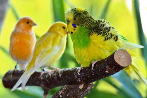 Evcil Hayvan Olabilecek En İyi Kuşlar