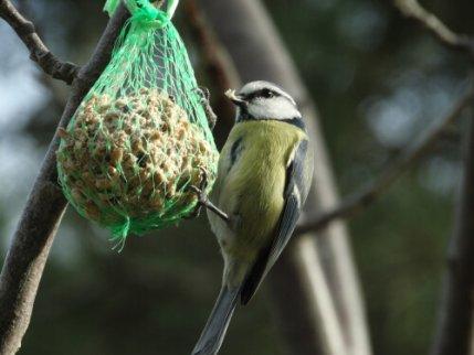 kuşlar için bahçede yiyecek bırakmak
