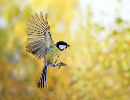 Bahçenize Kuşları Çekmek için Neler Yapabilirsiniz?