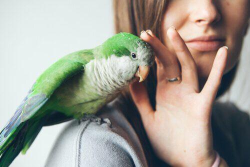 Kuşunuzu Parazitlerden Arındırmak