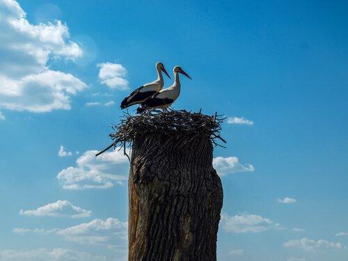 Klepetan ve Malena, Birbirine Âşık İki Kuş