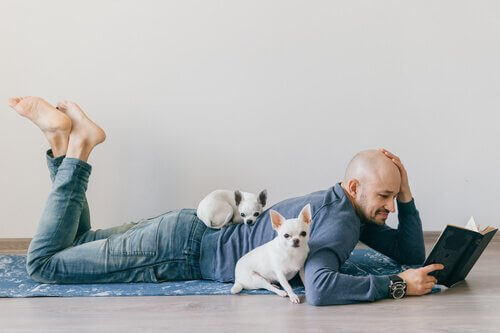 Minyatür Evcil Hayvanlar: Yeni Evcil Hayvan Modası
